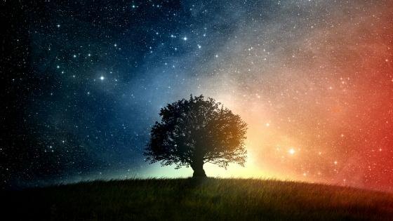 Lone tree under the starry sky wallpaper