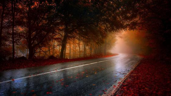 Wet road in the forest - Inspirational autumn wallpaper