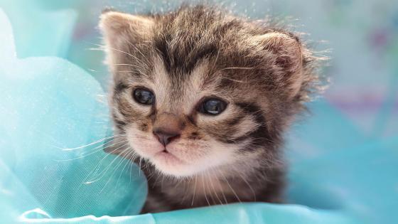 Sweet little cat with sleepy eyes wallpaper