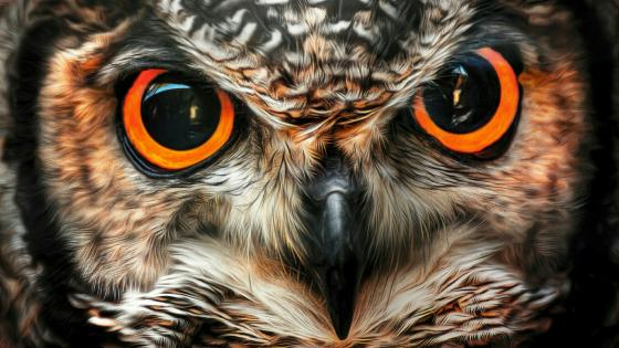 Big owl eyes wallpaper