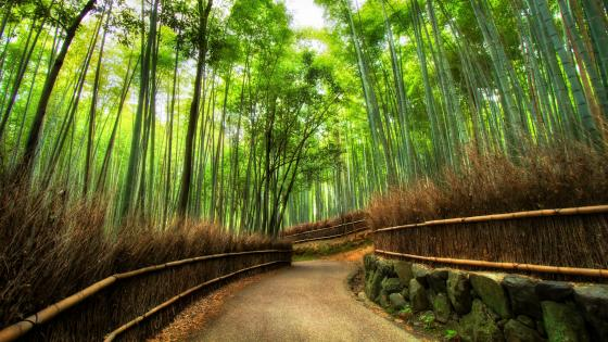 Arashiyama Bamboo Grove - Kyoto, Japan wallpaper