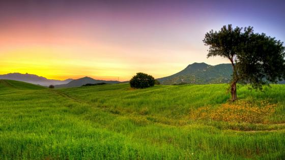 Green field in the sunset wallpaper