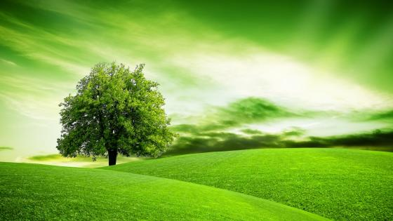 Green hillside field with a lone tree wallpaper