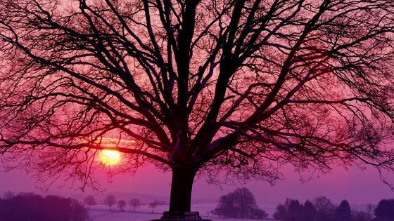 Pink winter sunset wallpaper