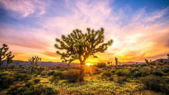 Joshua Tree National Park wallpaper