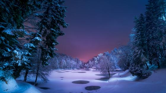 Snowy winter forest at night wallpaper