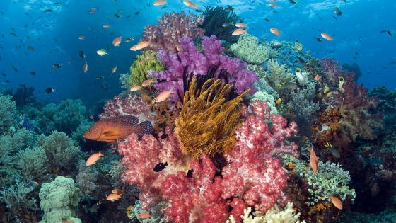 Colorful life under the sea wallpaper