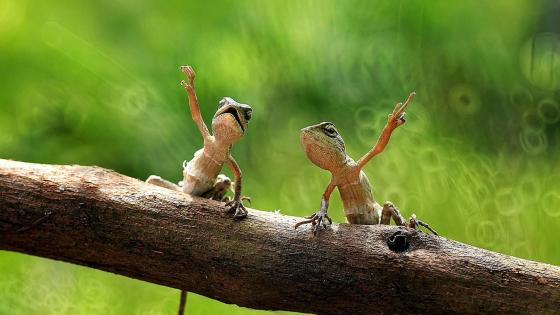 Dancing lizards wallpaper