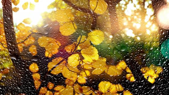 Autum window in the rain wallpaper