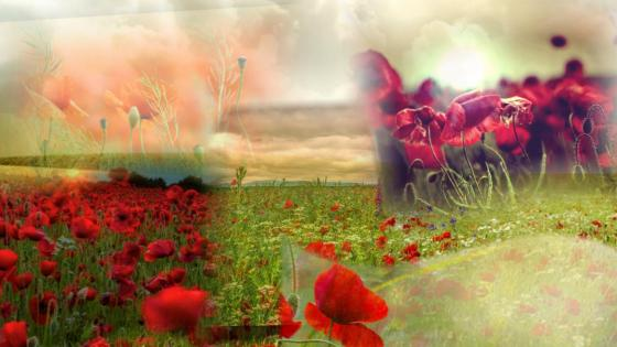 Poppies Collage wallpaper