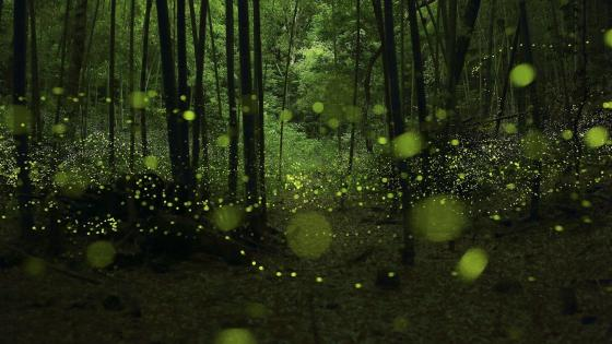 fireflies in the dark forest wallpaper