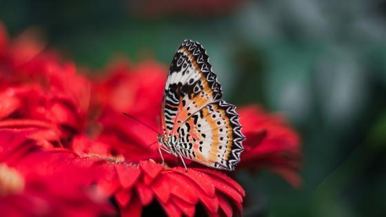 Penang Butterfly Farm  wallpaper