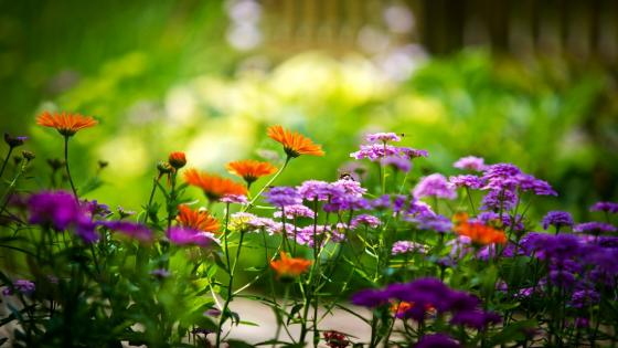 Colofrul garden flowers wallpaper