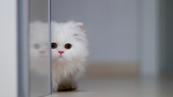 Cute cat  wallpaper