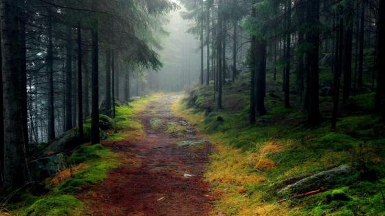 Deep forest in Norway wallpaper