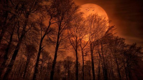 Orange full moon fantasy art wallpaper