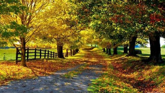 Autum forest path wallpaper