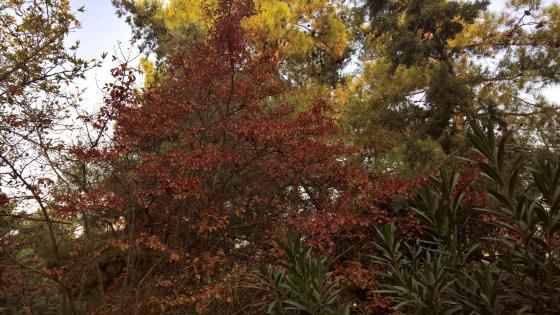 Brownish autumn landscape wallpaper