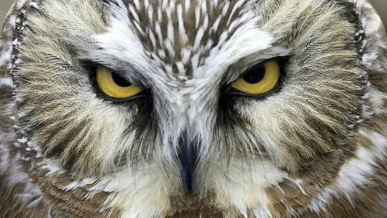 Owl look - Close-up photography wallpaper