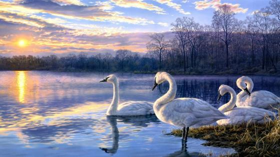 Swans at the lakeside - Painting art wallpaper