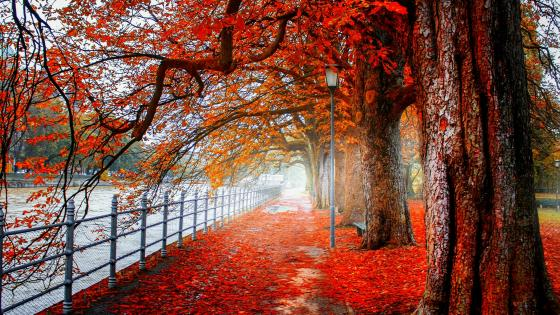Autumn riverwalk wallpaper