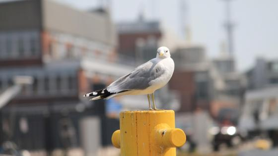 Seagull in the city wallpaper
