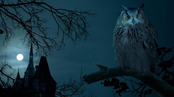 Owl in the full moon  wallpaper
