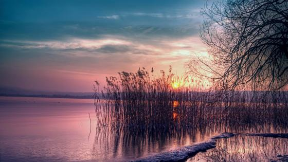 Sunset among the reeds wallpaper
