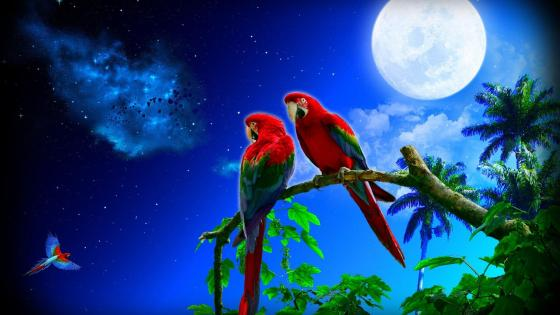 Macaws in the fool moon wallpaper