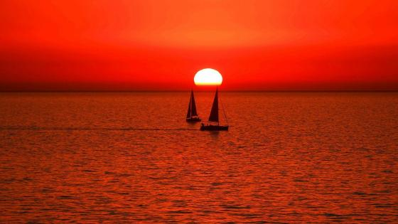 Sailboats in the sunset wallpaper