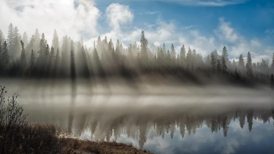 Misty morning reflection wallpaper
