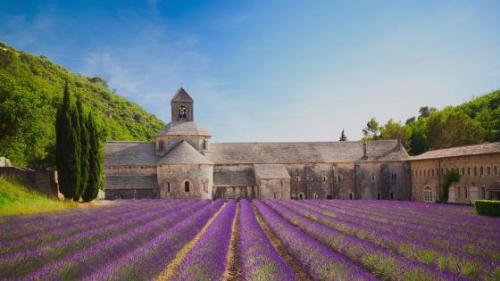 Sénanque Abbey - Provence, France wallpaper