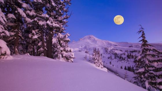 Winter full moon wallpaper