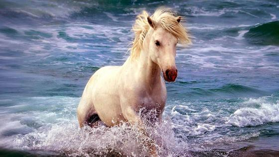 Horse in sea wallpaper