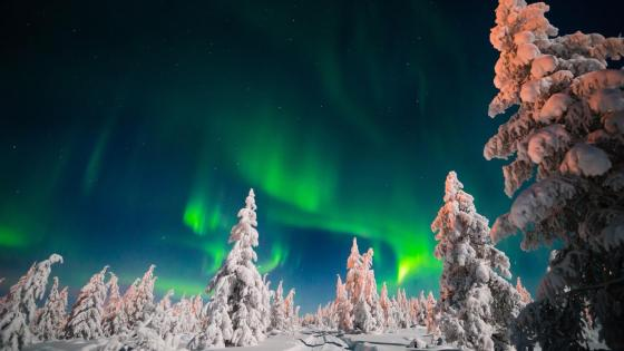 Aurora Borealis over the snowy forest - Sakha, Russia wallpaper