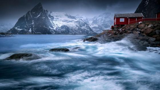 Reinefjord wallpaper