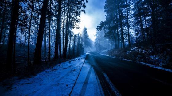 Winter sunlight on the road wallpaper