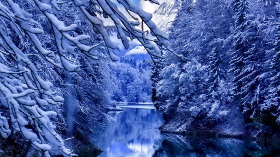 Frozen nature wallpaper