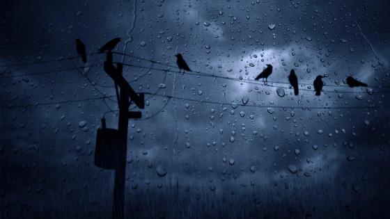 Crows in the rain wallpaper
