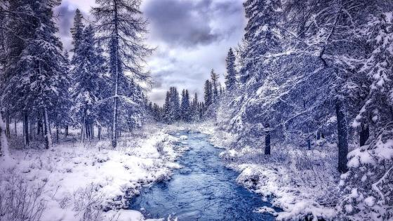 Winter in Canada wallpaper