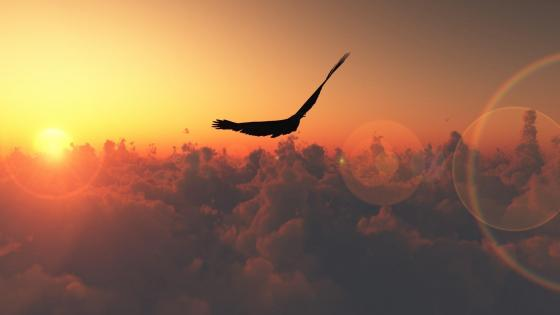 Fly above the clouds wallpaper