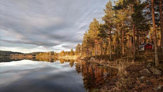 Hälsingland Province, Sweden wallpaper