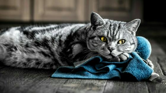 Cat on the floor wallpaper