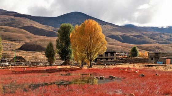 Daocheng in late autumn wallpaper