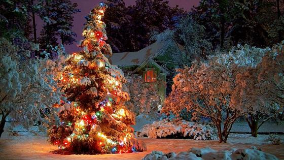 Christmas tree in the snowy garden wallpaper