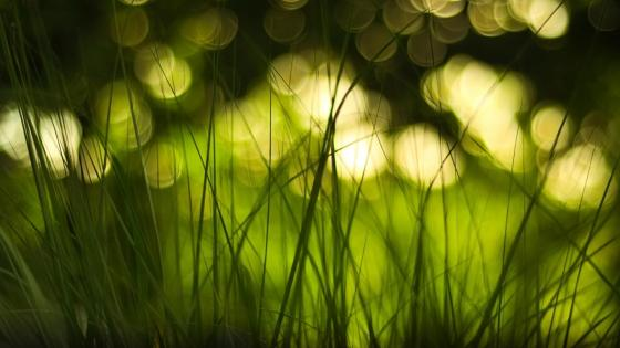 Green grass with bokeh lights wallpaper