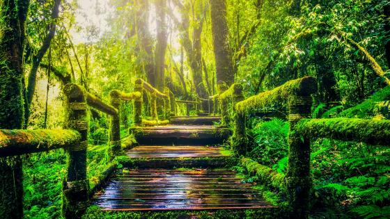 Walking path in the forest wallpaper