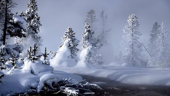 Misty winter wallpaper