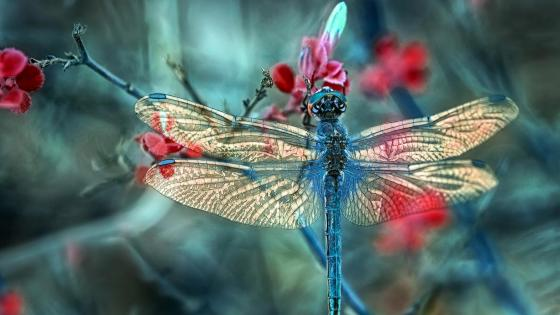 Dragonfly - Macro photography wallpaper