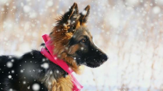 Old German Shepherd puppy wallpaper